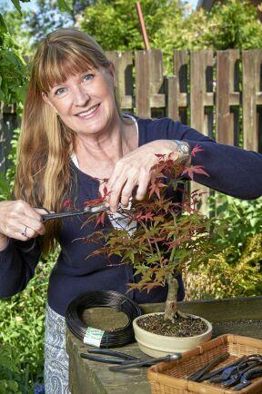 Maria Arborelius har drivit fram bonsaier i över 30 år och är kretsansvarig i södra kretsen i Svenska Bonsaisällskapet. Här visar hon hur hon beskär en japansk röd lönn.