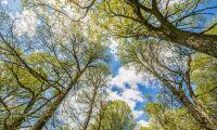 Fastighetsägare döms för trädfällning
