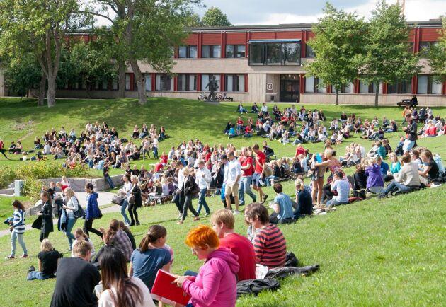 Skolstart för studenter vid SLU i Uppsala. Den största fördelen med att studera på en mindre universitet är gemenskapen, enligt svaren från studenter vid ett dussin lärosäten runt om i världen.