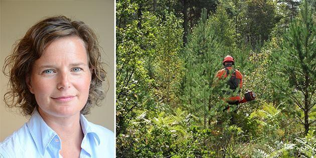 Roligare skogsbruk med ekonomin i fokus