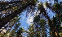 Regeringen måste samverka med andra skogsländer