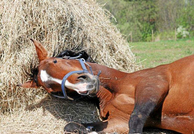 Till hösten om inte förr kommer många hästgårdar som tvingats att importera foder att upptäcka att hästnäringen är en sårbar näring på fler än ett sätt.