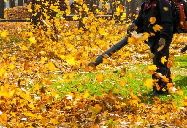 Där löven samlas trivs insekter och andra smådjur. Sedan kommer en maskin och blåser sönder deras värld.