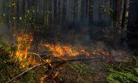 Eldningsförbud – stora skillnader på var du bor