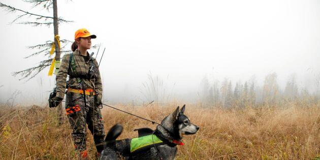 Ny undersökning: Nästan alla svenskar accepterar jakt