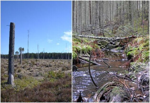 Uppfattningarna går isär om hur det går för den biologiska mångfalden i skogen.