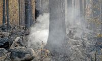 """SD: """"Sverige ska kunna bekämpa sina skogsbränder på egen hand"""""""