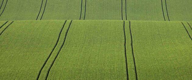 Black Earth Farming väntas vid dagens extrastämma besluta om att sälja bolaget för 1,6 miljarder svenska kronor.