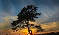 Nu börjar jakten på landets bästa trädfotograf