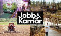 Träffa Jobb & Karriär på Borgeby