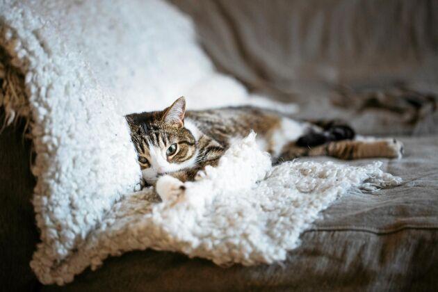 Ett lager till i soffan är både mysigt, praktiskt och snyggt.