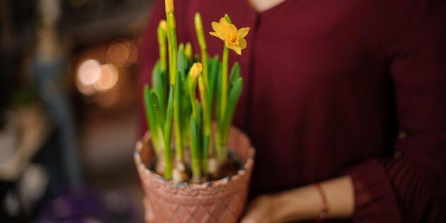 Forskning: Därför hjälper blommor äldre och ensamma i sjukdomstider
