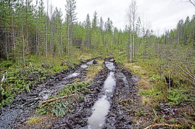 Färsk körskada vid en avverkning i höst. Skogforsks kurser är till för att ge tips för att undvika markskadorna - målet är detsamma som kursens namn: Bli spårlös.
