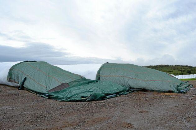 Nätet skyddar korvarna från att rävar och fåglar gör hål i plasten. Planen är att köpa in ytterligare nät för att kunna täcka över fler korvar.