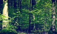 Storsatsning på orörda skogar i Danmark