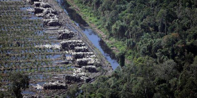 Vandrar 70 mil baklänges i avskogningsprotest