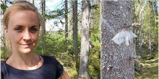 Björkdoft skrämmer bort barkborrarna