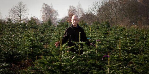 Minskat resande kan öka julgransförsäljningen