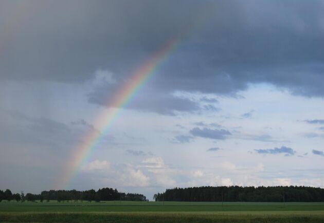 Det går inte att försäkra sig mot regnskador på skörden i dag.