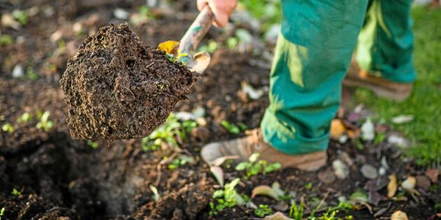 Trädgårdsjord kan orsaka ovanlig legionella i Sverige