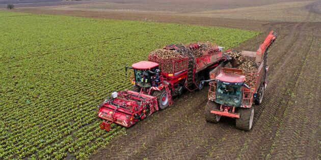 Mindre jord i maskinen med ny plog till upptagaren
