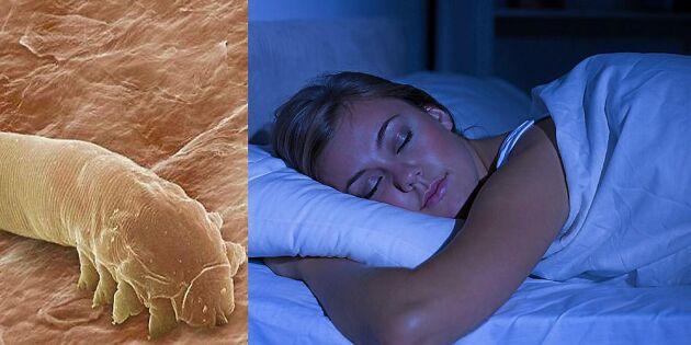Det okända kvalstret – därför kryper de i ditt ansikte på natten
