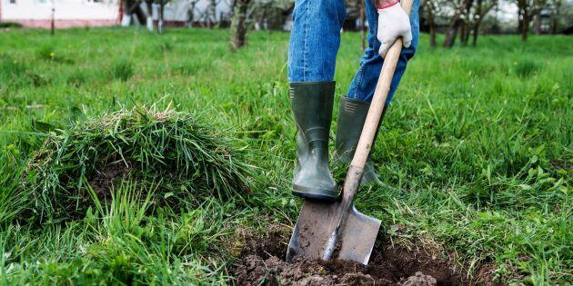 Plantera träd allra bäst - experten tipsar