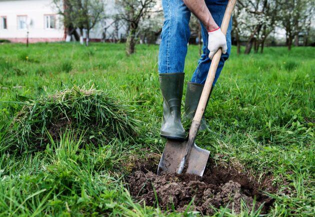 Plantera ett träd, här är experttipsen som hjälper dig.