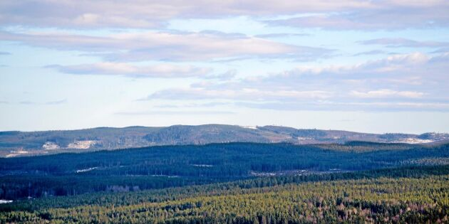 Forskare: Skogen räcker inte för att nå klimatmål