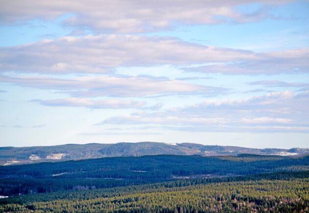 I framtiden behövs både mer skog på produktionsmarken och högre naturvärden på naturvårdsmarken. Bägge löser man med skötseln, anser Tomas Lundmark.