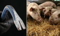 Nu ska forskare studera hoten mot djurbönder