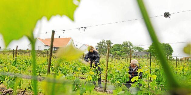 Svenske vinbondens kamp för gårdsförsäljning
