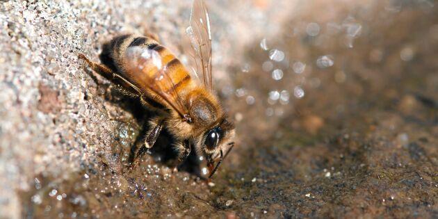 5 sätt att bjuda ett törstigt bi på vatten