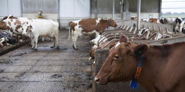 Prisnedgången på mjölk kommer för tidigt