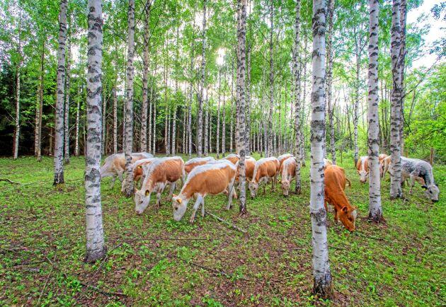 Det finska jordbruket får ett krispaket på 960 miljoner kronor i regeringens budgetsproposition.