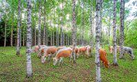Krispaket för jordbruket i ny finsk budget