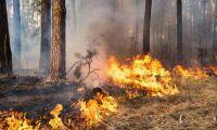 Höjd brandrisk och många skogsbränder