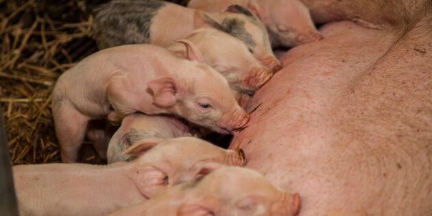 Elva får pengar för projekt för ökad djurvälfärd