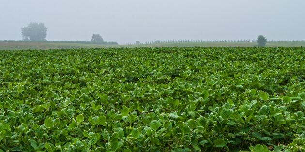 Kinas tullar drabbar amerikansk soja