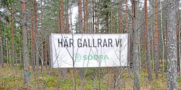 """""""Ska Södra vara storskogsägare i Baltikum?"""""""