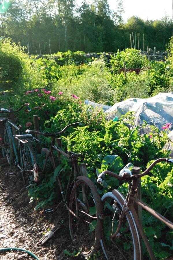 Med ett välfyllt trädgårdsskafferi finns många ingredienser att välja mellan till måltiderna.