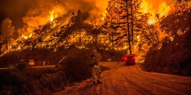 Historiens största skogsbrand i Kalifornien