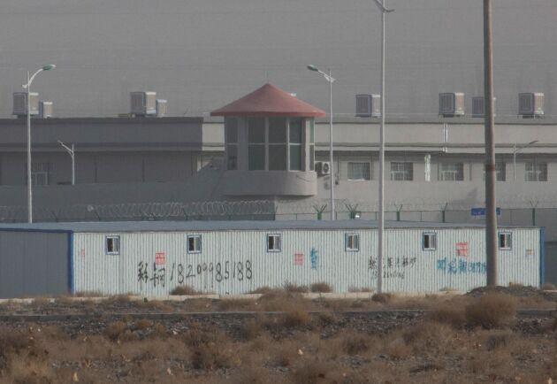 Uigurer tvingas till arbete på bomullsfälten i Xinjiang, enligt en ny rapport.