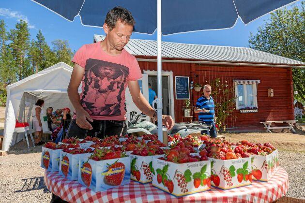 Mångsysslare. När han får en paus i skötseln av djuren, trädfällningsföretaget med mera så säljer Mikael gårdens jordgubbar.