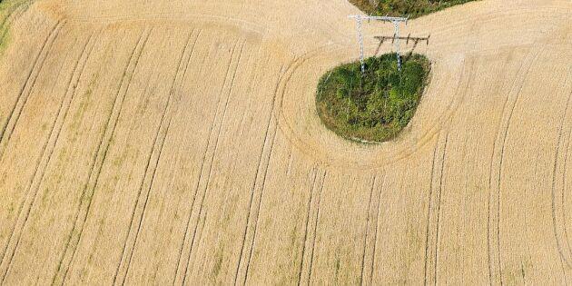 Studie: Nutida torka i Europa inte unik