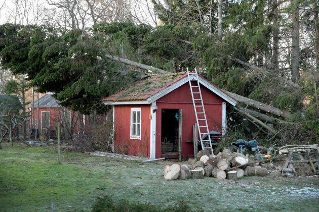 Arholma i Norrtäljes skärgård drabbades hårt av stormen Alfrida. Fallna träd präglar hela ön och strömmen väntas inte tillbaka förrän i slutet av januari.