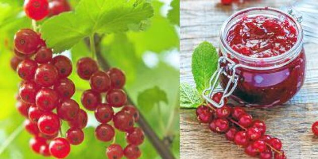 Gör rårörda vinbär – supersnabbt, enkelt och jättegott!