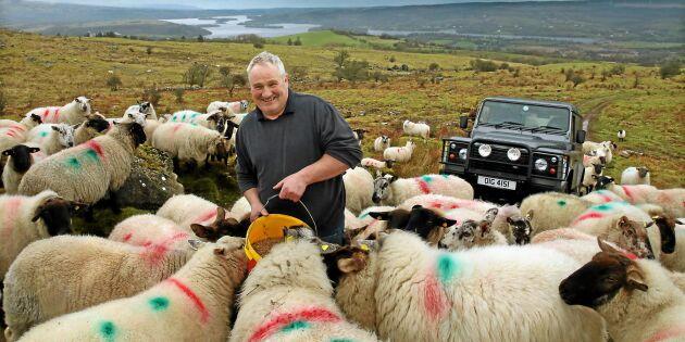 Kris för irländsk köttexport efter Brexit
