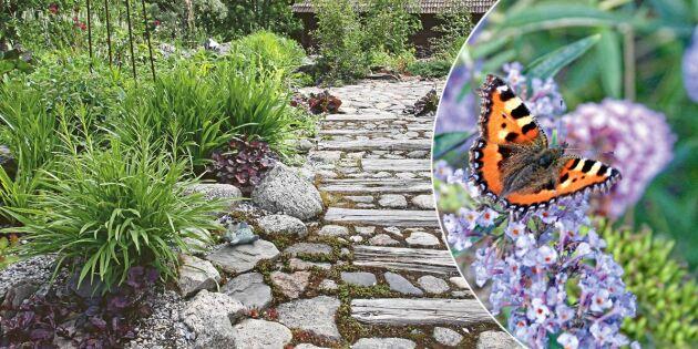 Expertråd: Så bygger du en klimatsmart trädgård