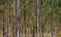 Här satsas det på plantageskog – för klimatet